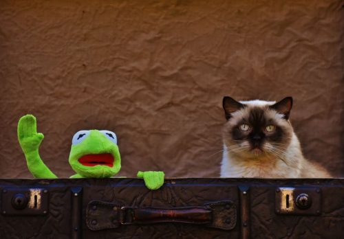 cat and kermit