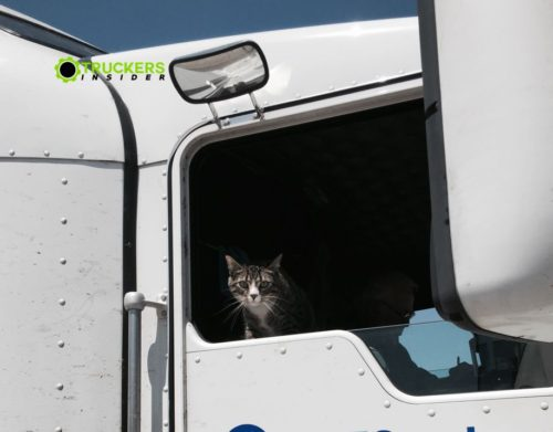 pet cat in semi truck